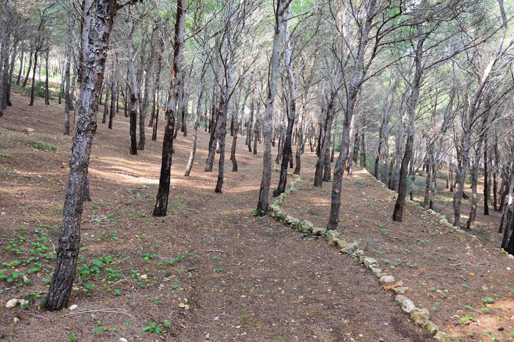 Sentiero tra Cala Minnola e Cala Calcara